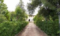 Viale-Villa-del-Vescovo.jpg